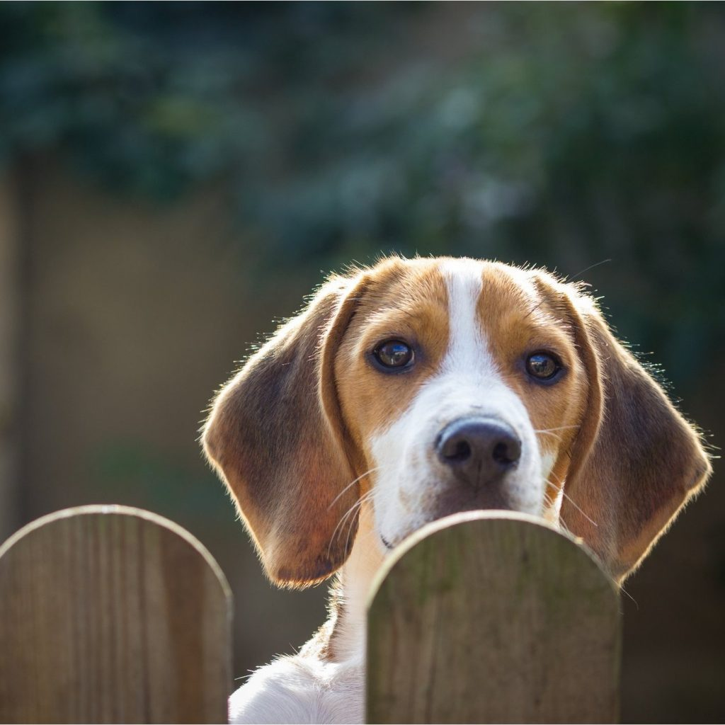 Alternatives To Grass In Backyard for dogs